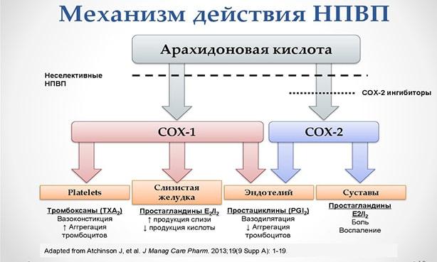 Механизм действия НПВП