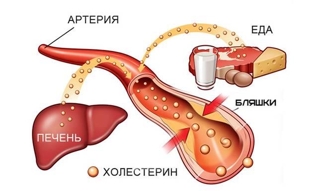 Поступление холестерина с едой