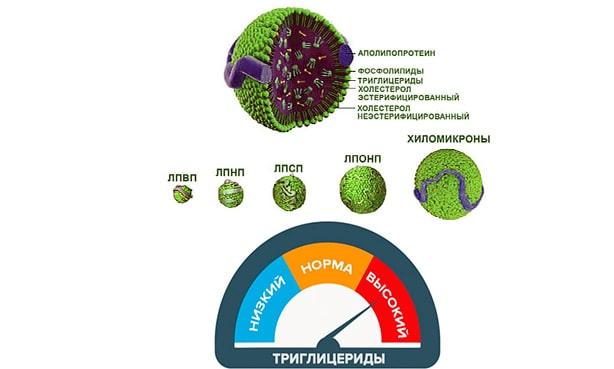 Триглицериды и липопротеины