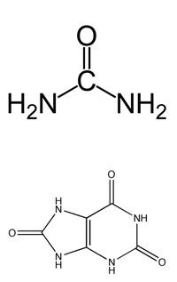 мочевина и мочевая кислота