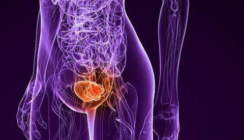 Анатомические особенности женщин