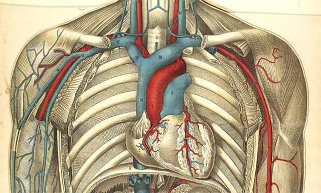 Брахиоцефальные артерии
