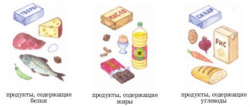 Белки, жиры и углеводы