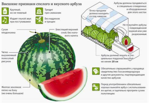 Инструкция по выбору арбузов