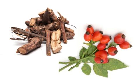 Корни (а также другие части целебного растения) могут использоваться для избавления от камней в органах выделительной системы.