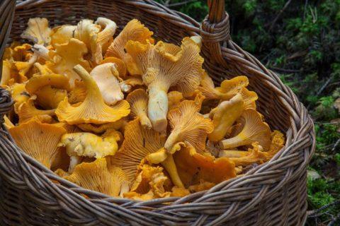 Лицам с 1 почкой не рекомендуется есть грибы