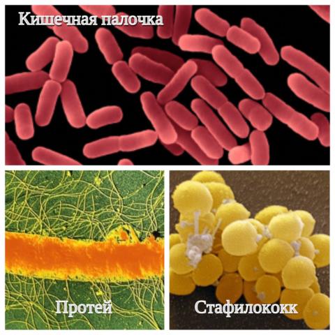 Микроорганизмы, вызывающие заболевание