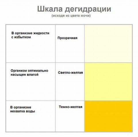 На фото можно увидеть изменение цвета урины с учетом объема употребляемой жидкости человеком за сутки.