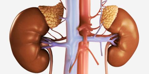 Надпочечники представляют собой парный орган внутренней секреции