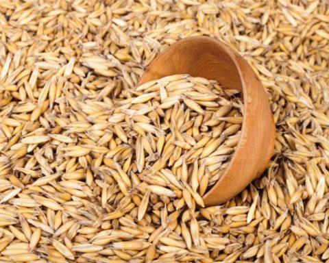 Овсяные зерна