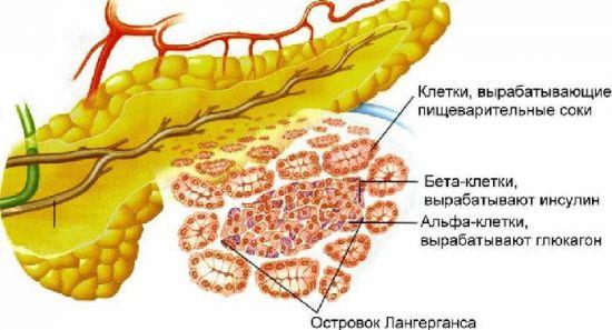 Производство инсулина и глюкагона