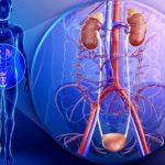 Рядом с мочевым пузырем расположено множество важных вен и артерий