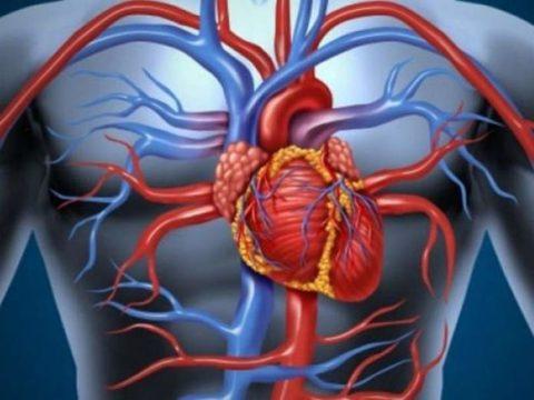 Улучшает работу сердечно-сосудистой системы