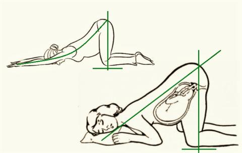 Варианты поз Зайца и Ребёнка – асан йоги при нефроптозе у беременных
