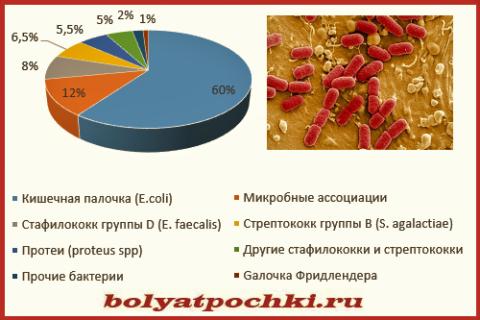 Виновники пиелонефрита (среди микробных ассоциаций, 20% - это кишечная палочка с энтерококком)